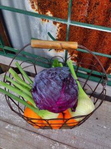 veg fennel_cabbage