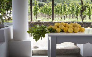 Food and wine experiences Sicily- Dominique Rizzo